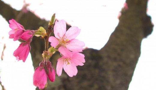 【春・桜】フォトコンテストを開催します🌸Amazonギフト券プレゼントも♪